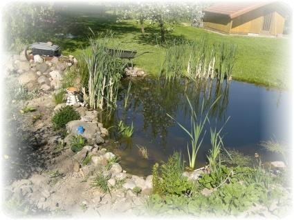 Meine homepage for Fische im teich