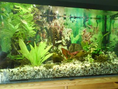 bis 200l besatz frage aquarium forum. Black Bedroom Furniture Sets. Home Design Ideas